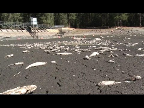 California Lake Runs Dry Overnight, Killing Thousands Of Fish