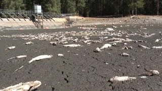 California Lake Runs Dry Overnight, Killing Thousands Of Fish.