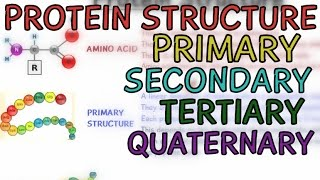 Protein Structure - Primary - Secondary - Tertiary - Quaternary - Structure of Protein