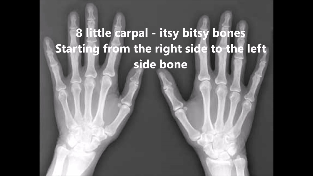 Carpal Bones Song Youtube