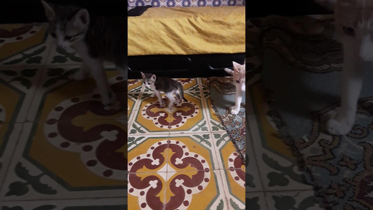 وجدة قط صغير في الشارع فادخلته الى البيت