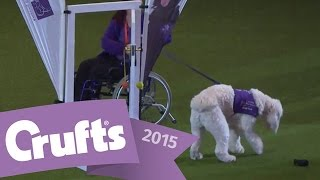 Canine Partners 25th Anniversary Display | Crufts 2015
