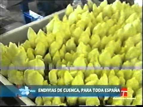 CULTIVO ENDIVIAS EBOOK