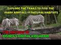 The Animals Of Disney S Animal Kingdom mp3