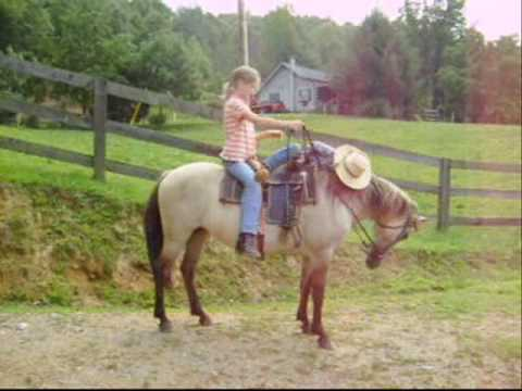 *Gorgouse* Child Safe,Buckskin Trail Pony*For Sale*