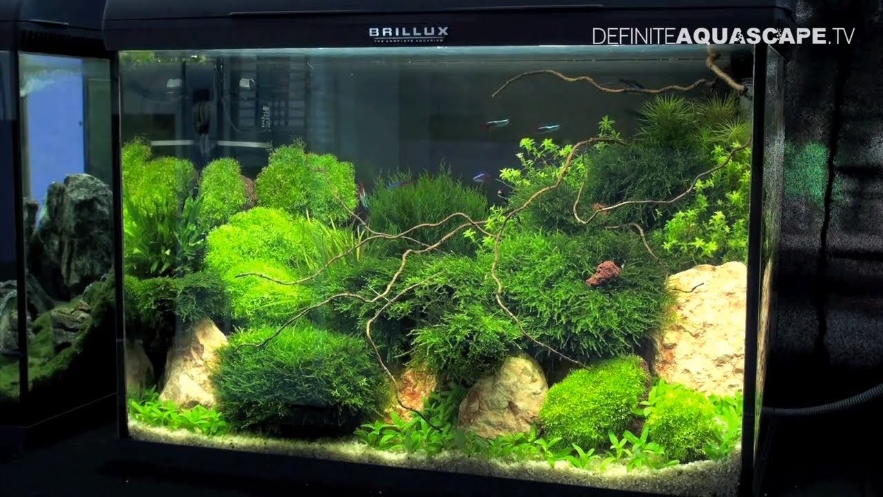 Aquascaping Best planted aquariums of