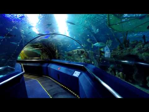 Underwater Tunnel at the Aquaria KLCC in Kuala Lumpur