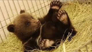 ВЕЛЕС - помощь диким животным!!!