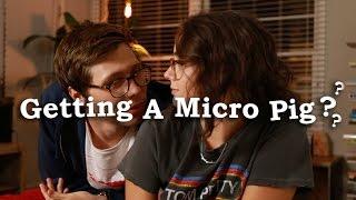 should we get a micro pig