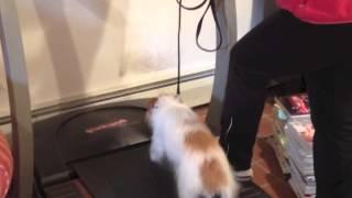 Treadmill Training New Dog- Solid K9 Training