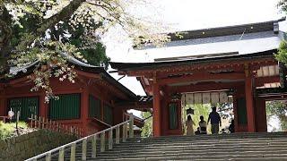 桜の絶景スポット 鹽竈神社・志波彦神社