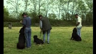 Породы собак  Ротвейлер 2
