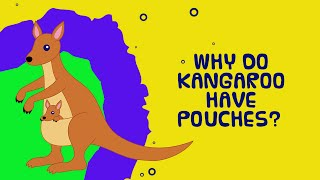 Why do kangaroos have pouches? - Kids Video Show