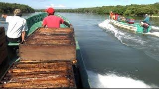 Miel de Mangle en el Golfo de México