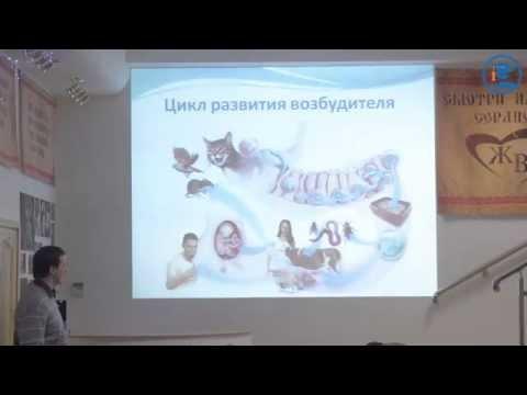 «Токсоплазмоз кошек», В. А. Владимиров