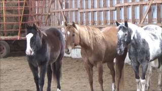 focus liberté avec mes 3 chevaux, music
