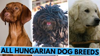 ALL Hungarian Dog Breeds