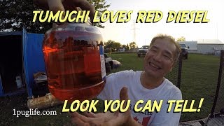 you will never guess who bought the red diesel!!