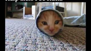 i are a cute burrito kitty :)