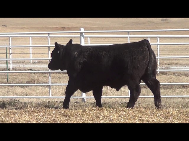 Express Ranches Lot 398