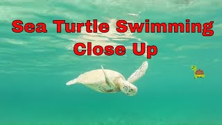 Sea Turtle Swimming, Nassau, Bahamas. Awesome. Beautiful. Very Cool.