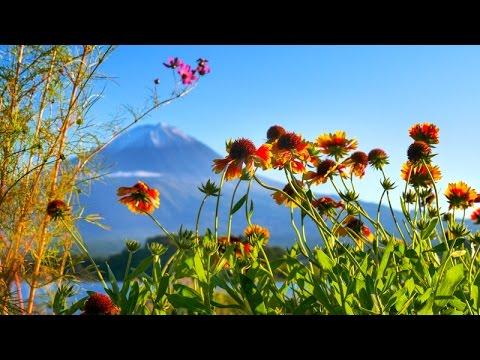 Japan Best Nature Destination (Yamanashi).