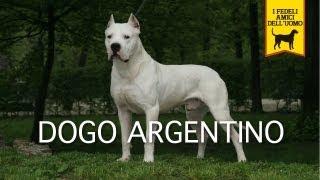 DOGO ARGENTINO Trailer Documentario thumbnail