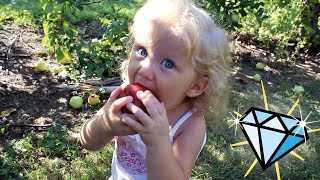 Apple Picking at the Apple Orchard | Our Quest to find the Missing Diamond..!!