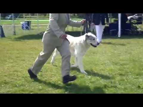 FSS Central Asian Shepherd Dog