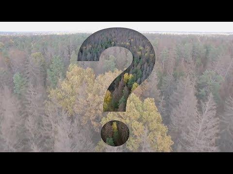 Manipulacja i wrzask o Puszczę Białowieską. Kto ma rację w tym sporze? Obszerny wywiad z ekspertem