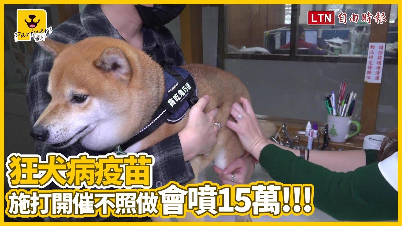 狂犬病疫苗沒打有處罰!民眾大驚:「不會被抓去關吧?」 - YouTube