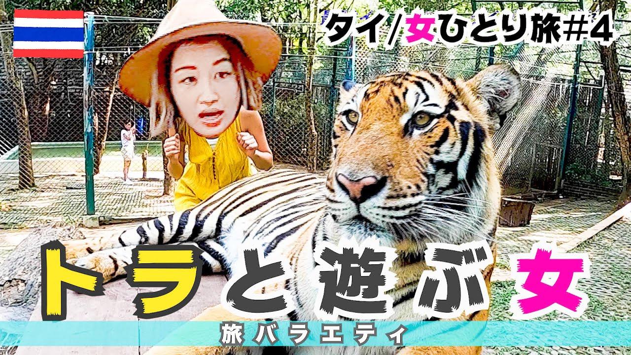 【トラと遊ぶ女】タイ・チェンマイ旅、最強体験スポットでトラと、添い寝 by 近藤あや