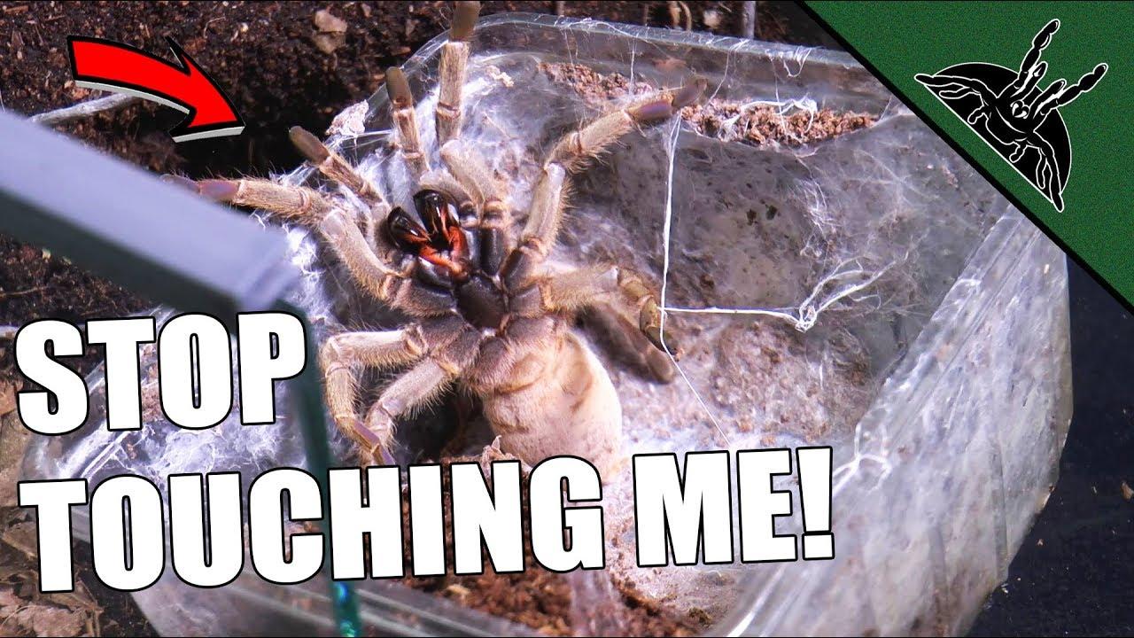 ungrateful-tarantulas-rehouse-vid