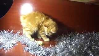 Рыжая кошечка играет в мишуре