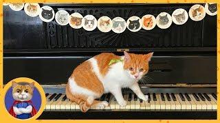 Рыжик в котокафе Котиссимо. Много спасенных кошек и приятная атмосфера