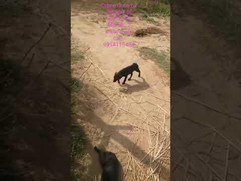 Animal cruelty exposed