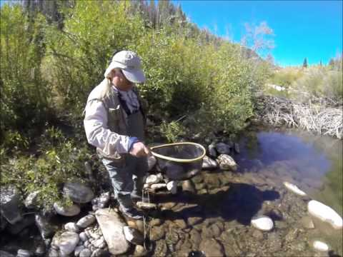 Fly Fishing - West Fork Of The Duchesne