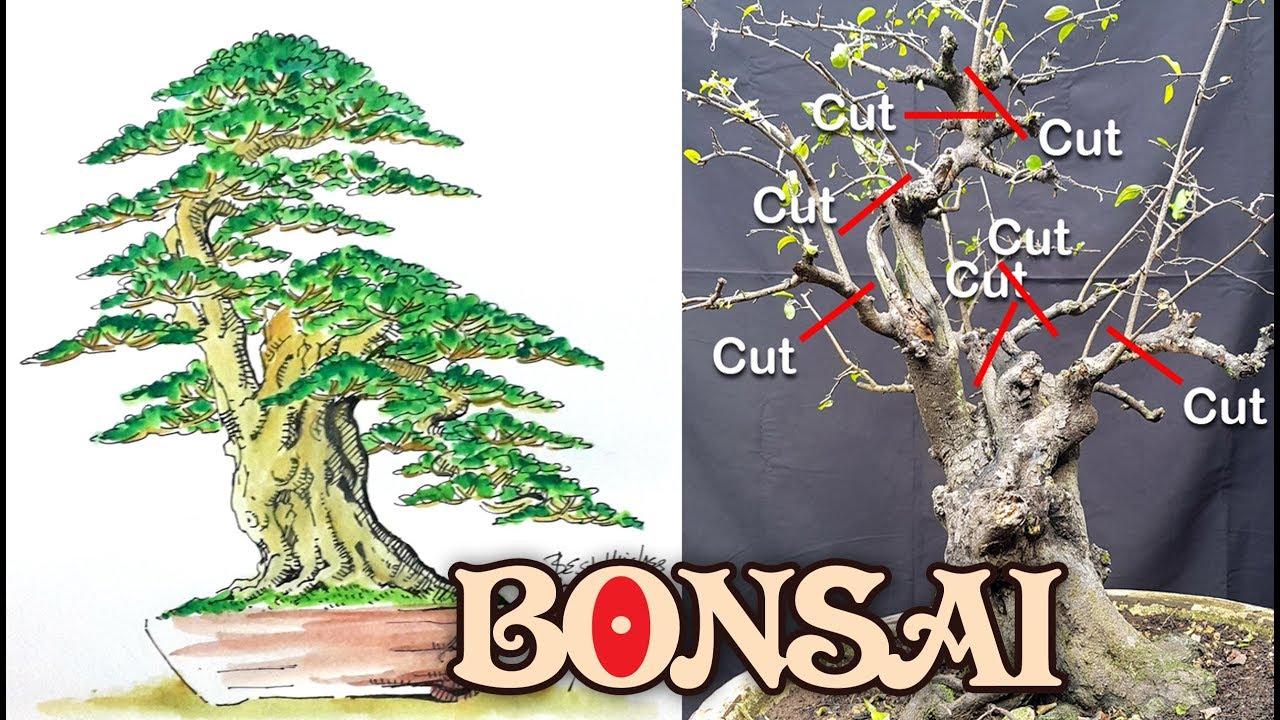 Cara Cepat N Mudah Belajar Membuat Bonsai Mustam By Tedy Boy Indonesia