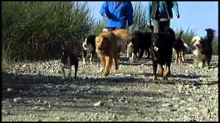 For The Love Of Dogs - Shaw Tv Nanaimo