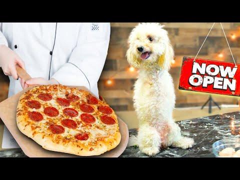 I Opened a Restaurant for Homeless DOGS!