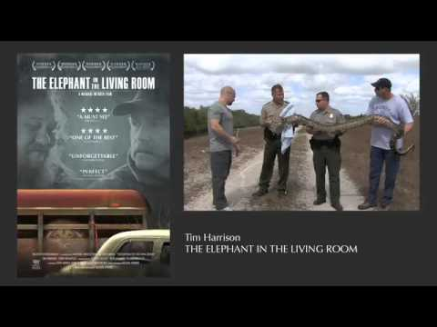 Radio Los Angeles The Elephant In The Living Room Youtube