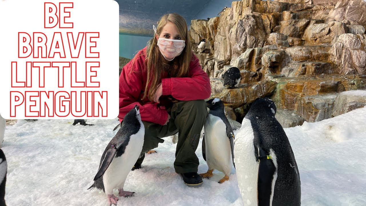Be Brave Little Penguin I SeaWorld I Giles Andreae I Book Days I Penguins I Kassi Kincaid I Texas