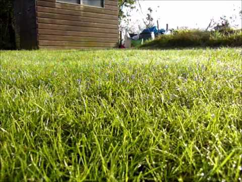 10 Hours of Watching Grass Grow
