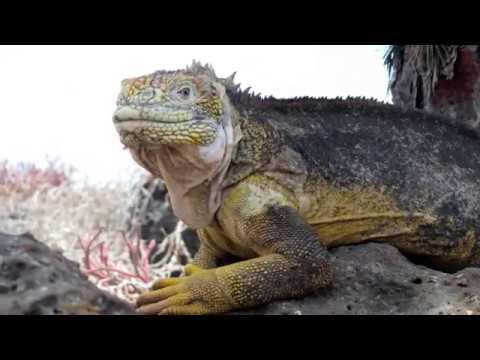 Ecuador / Galapagos Dental & Medical Mission Trip 2017