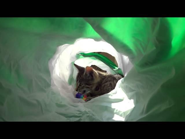 Adventurous Jonasek: Inside cat tunnel
