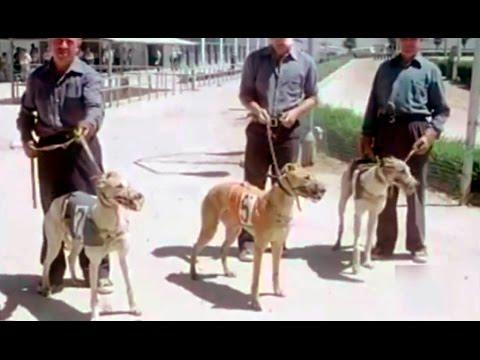 1980 Cra de galgos - Carreras de galgos - Candromo Madrid - Galgueros - Greyhound Racing