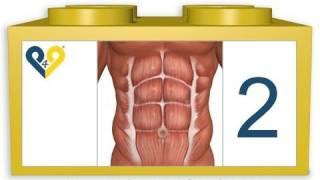 Лучшие упражнения для брюшного пресса (Уровень 2) thumbnail