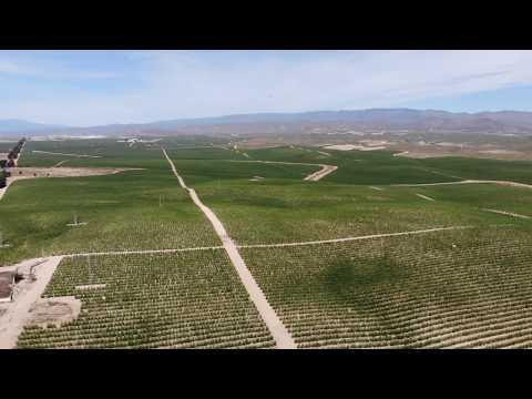 Super Intensive olive plantations in the semi arid lands of Almeria, Andalucia