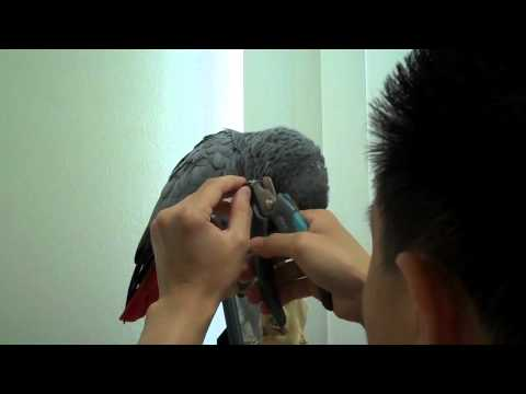 How to Trim Your Bird's Claws / Toenails Safely