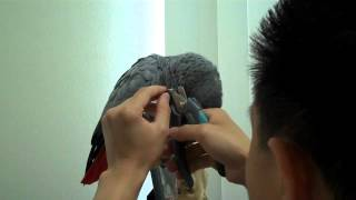 How to Trim Your Bird